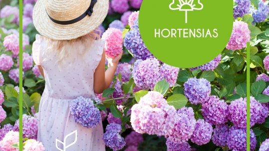 Catálogo de Hortensias Río Tollo 2020